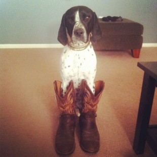 dog wearing cowboy boots
