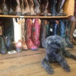 Boots and Cute Dog