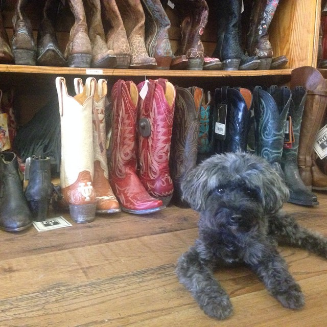 allens cowboy boots cute dog